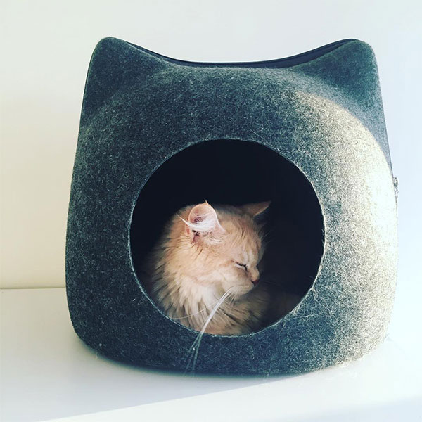 cat sleeping in hiding covered bed