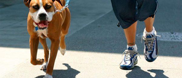 Dog Running Jogger