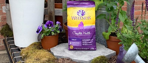 Wellness Complete Health Chicken outside