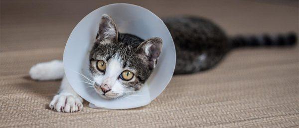 Cat in cone