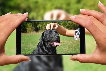 dog with camera phone