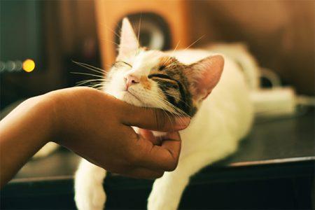cat snuggling