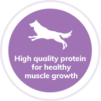 Dog-protein-muscle-growth